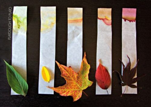 leaf chromatography activity