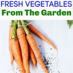 How to Freeze Fresh Vegetables e1564495729870