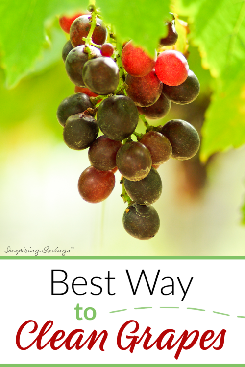 Best Way to clean Fresh Grapes - Very Simple & Easy