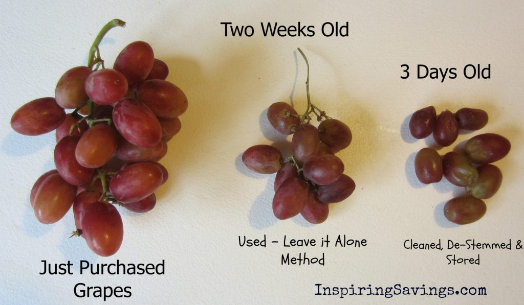 Fresh Grapes at various stages of days old