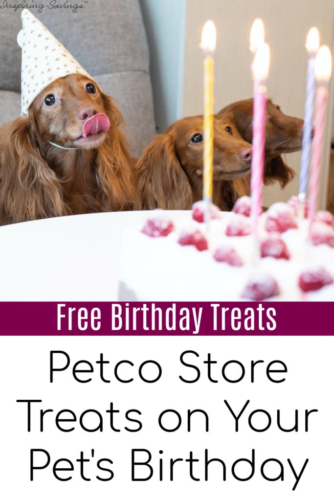 Dogs with birthday cake - celebrating pet's birthday