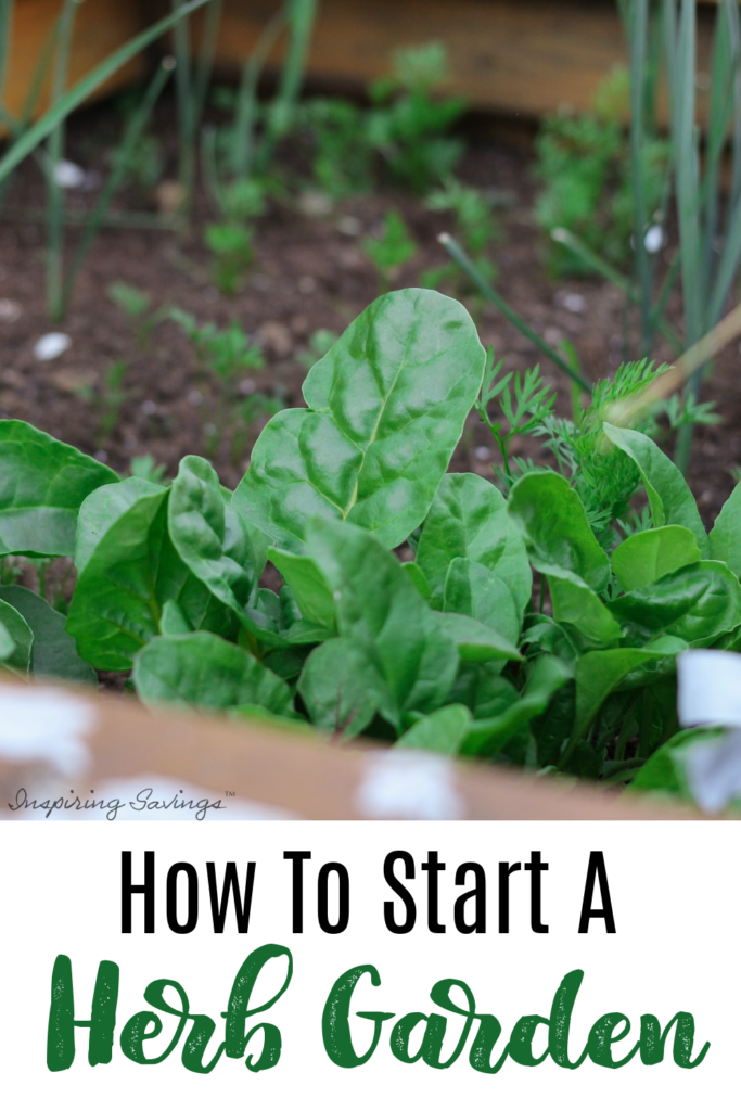 Growing your own kitchen herb garden is a simple and inexpensive undertaking that pays off big for your taste buds and your budget. Learn to grow your own. Save money on fresh herbs.