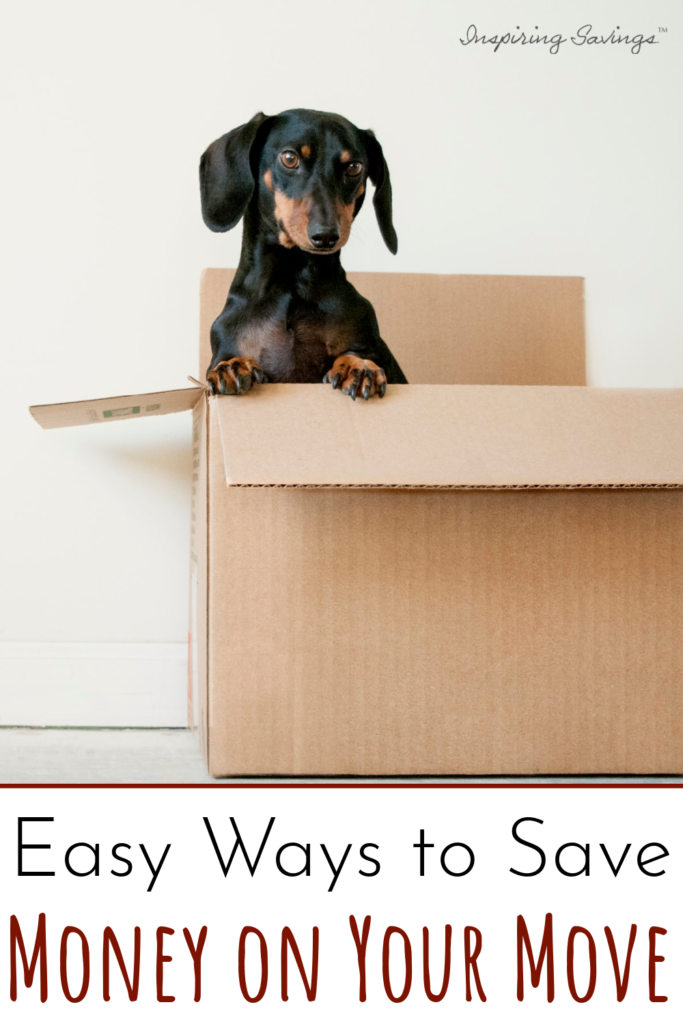 dog in packing box - Easy Ways to save money on your move