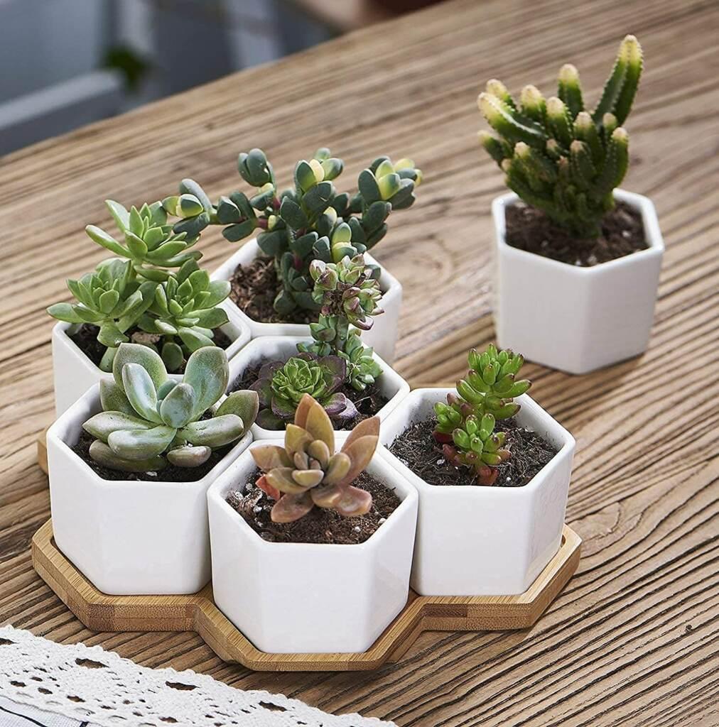 Hexagonal Succulent Planter Set